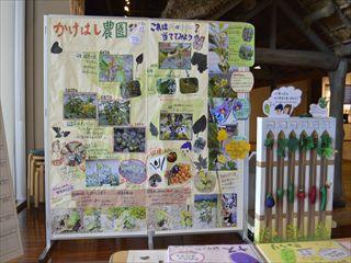 食文化館日記 » 野菜の観察日記・簡単料理レシピを展示しました! 41408f9d70a0