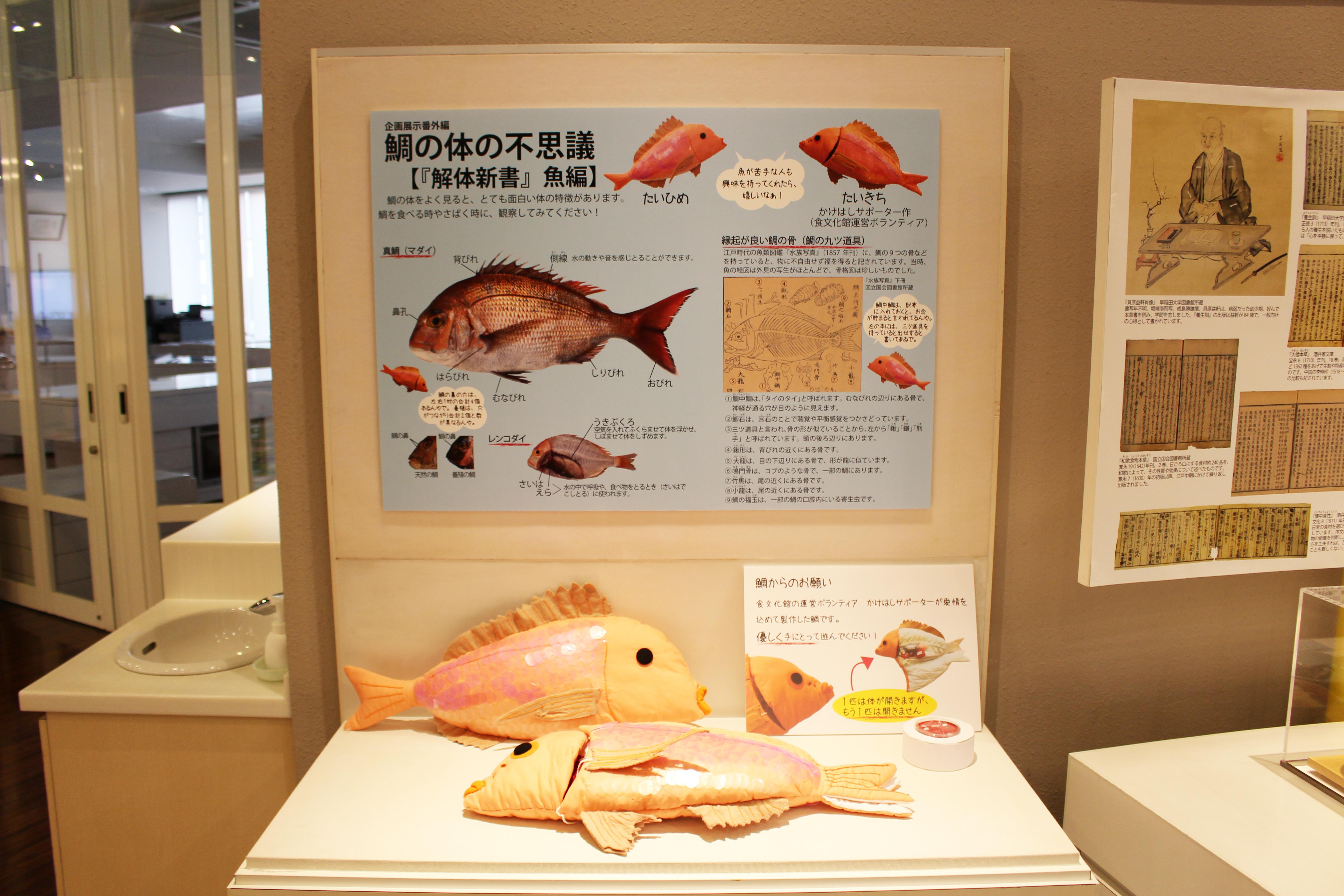 食文化館日記 » 企画展示番外編「鯛の体の不思議」を開催中です! e90c389b05