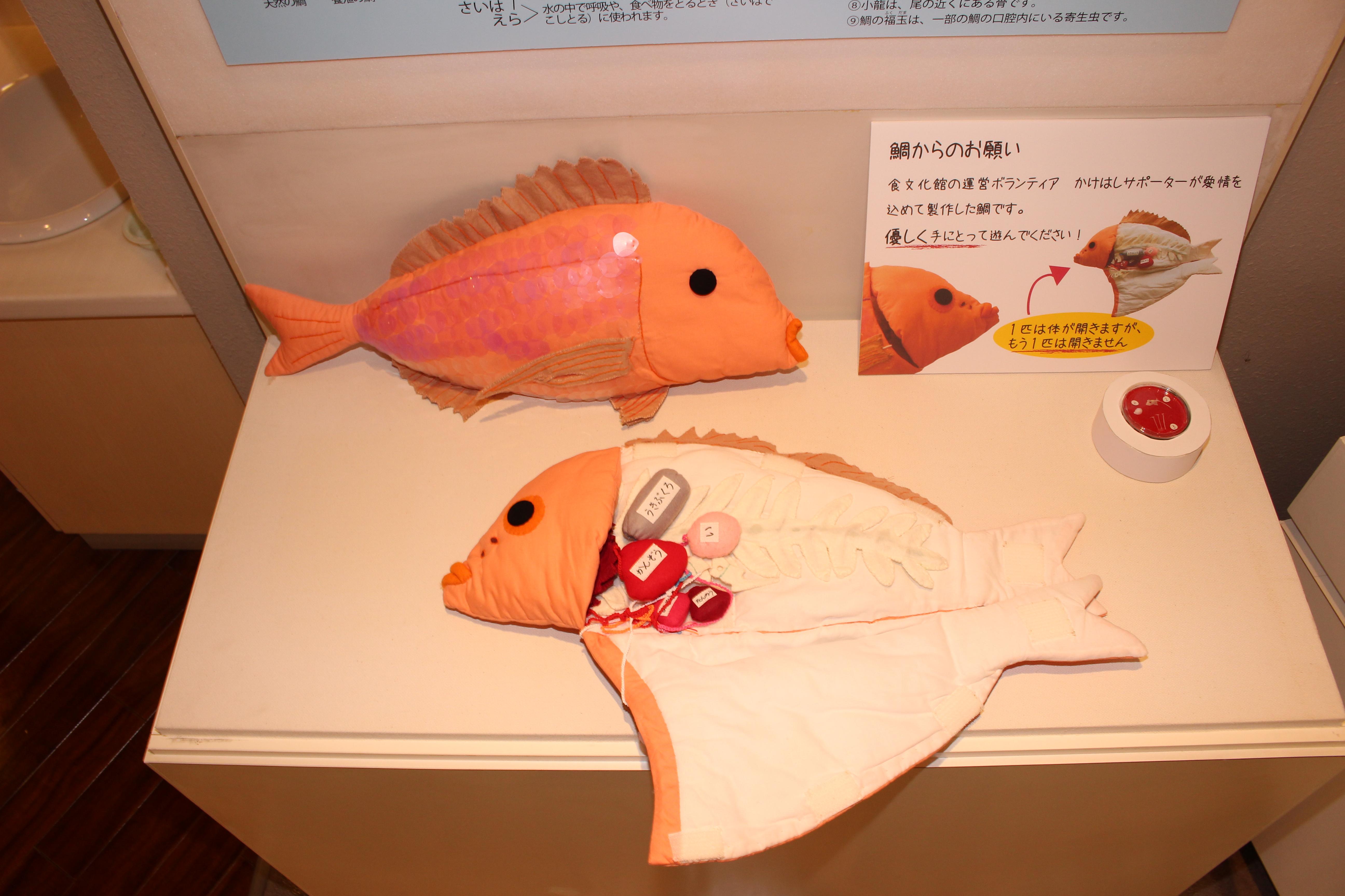 食文化館日記 » 企画展示番外編「鯛の体の不思議」を開催中です! b4dbf01f130f0